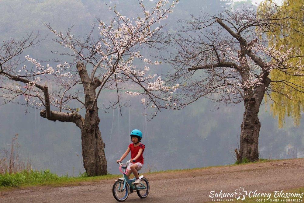 SakurainHighPark-May1015-2024.jpg