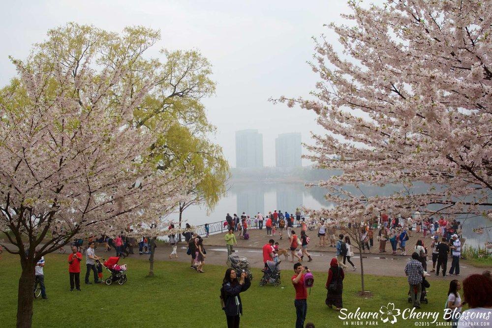 SakurainHighPark-May1015-2015.jpg