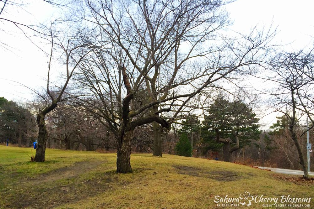 sakurainhighpark_Mar17_16_04-1920x1280.jpg