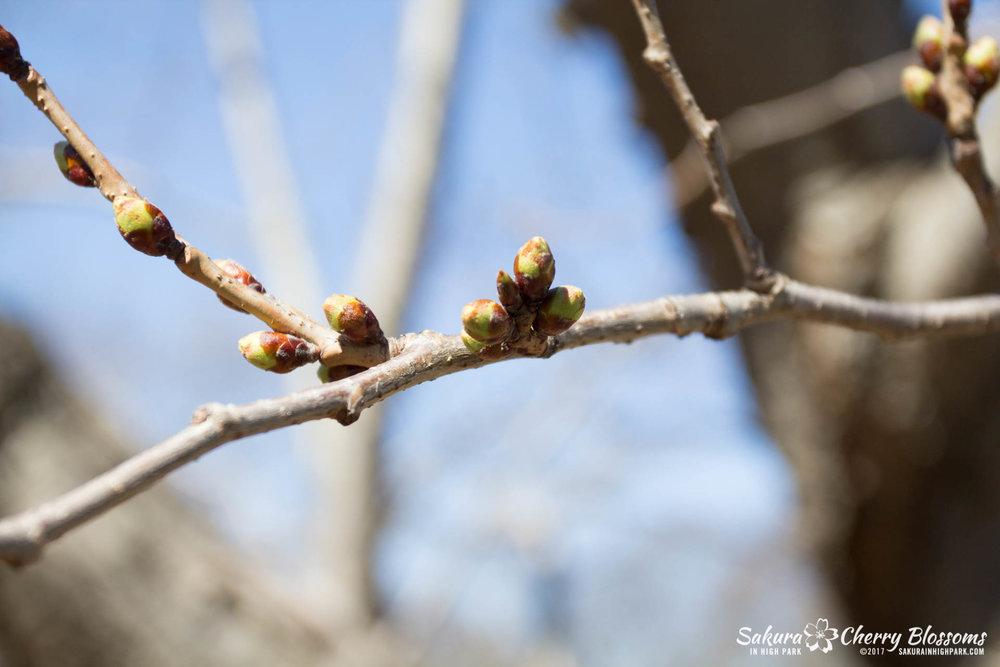 SakurainHighPark-April7-2017-53.jpg