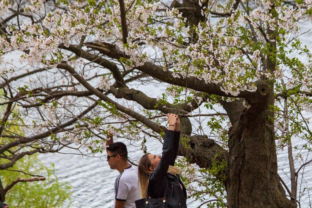 Sakura-Watch-May-10-2018-63.jpg