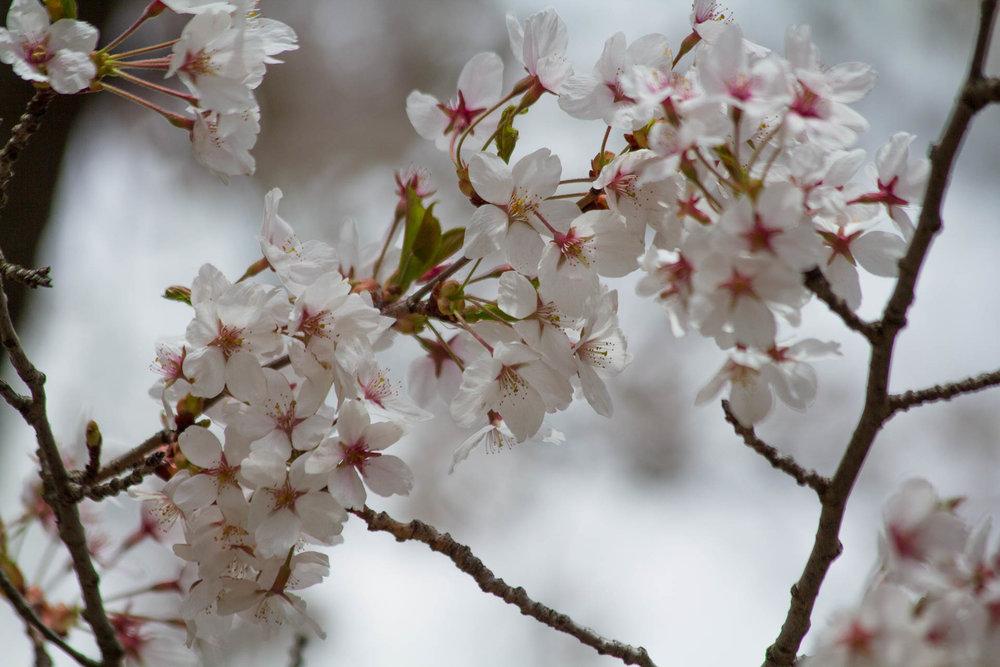Sakura-Watch-May-10-2018-96.jpg