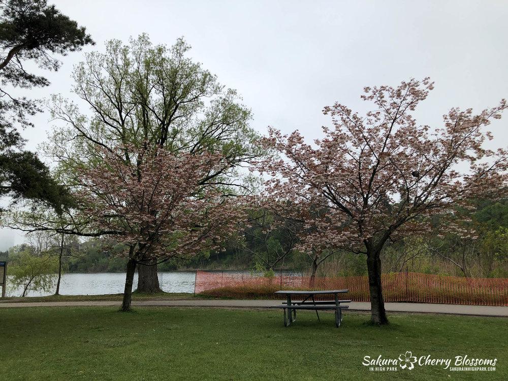 Sakura-Watch-May-22-2018-30.jpg