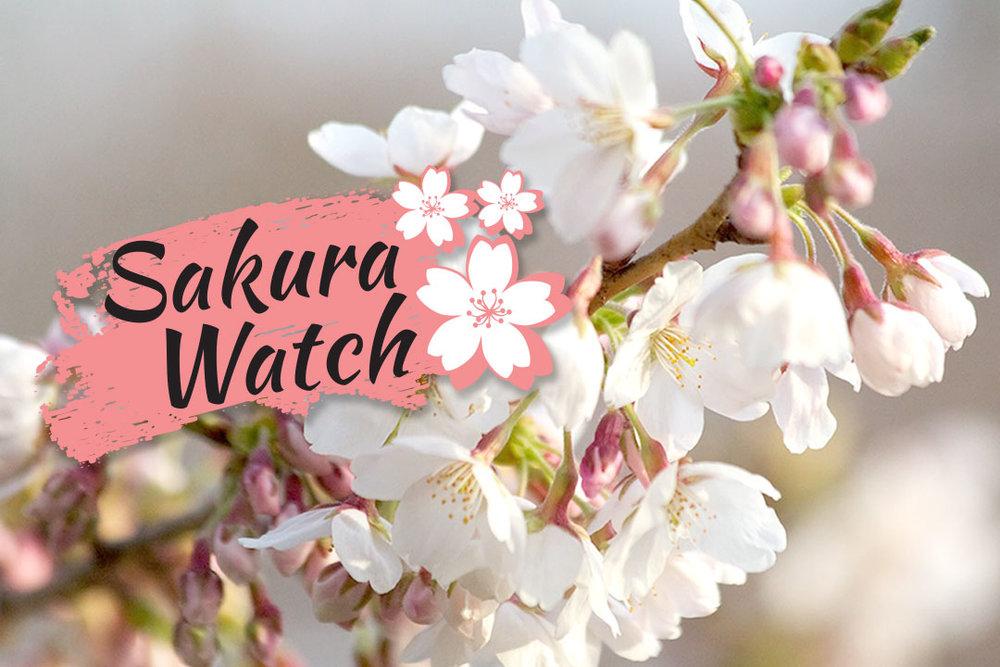 Sakura-Watch-logo-preview.jpg