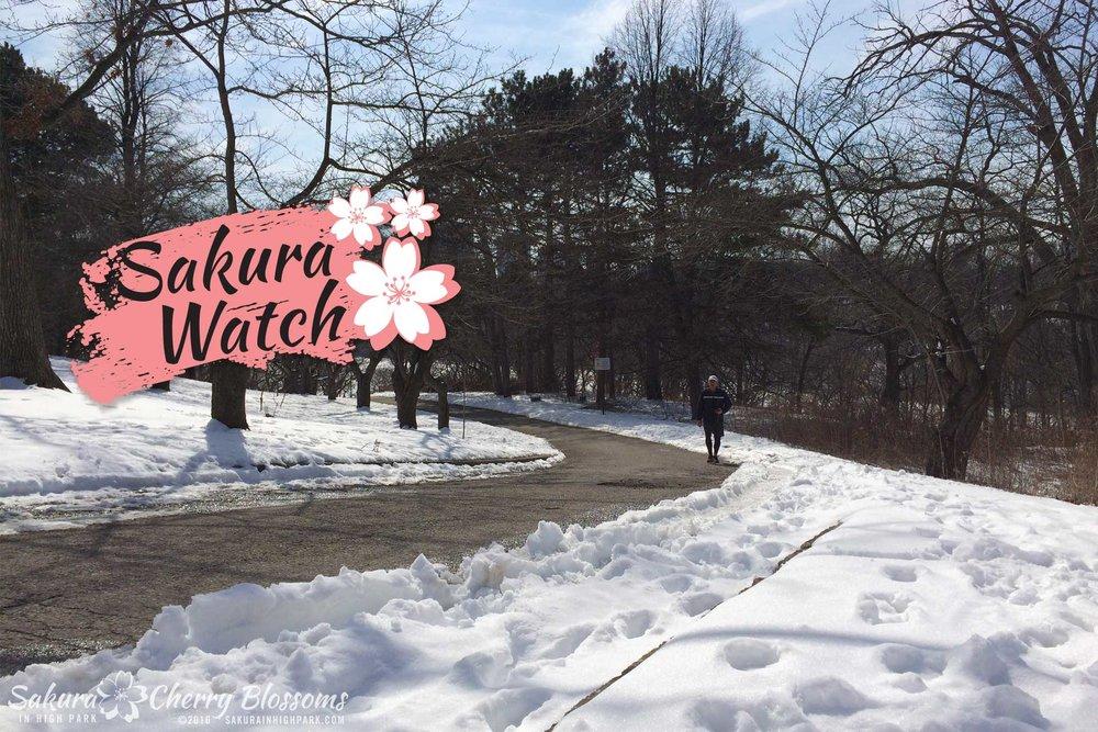 sakurainhighpark_Mar6_16_11-1920x1280-1.jpg