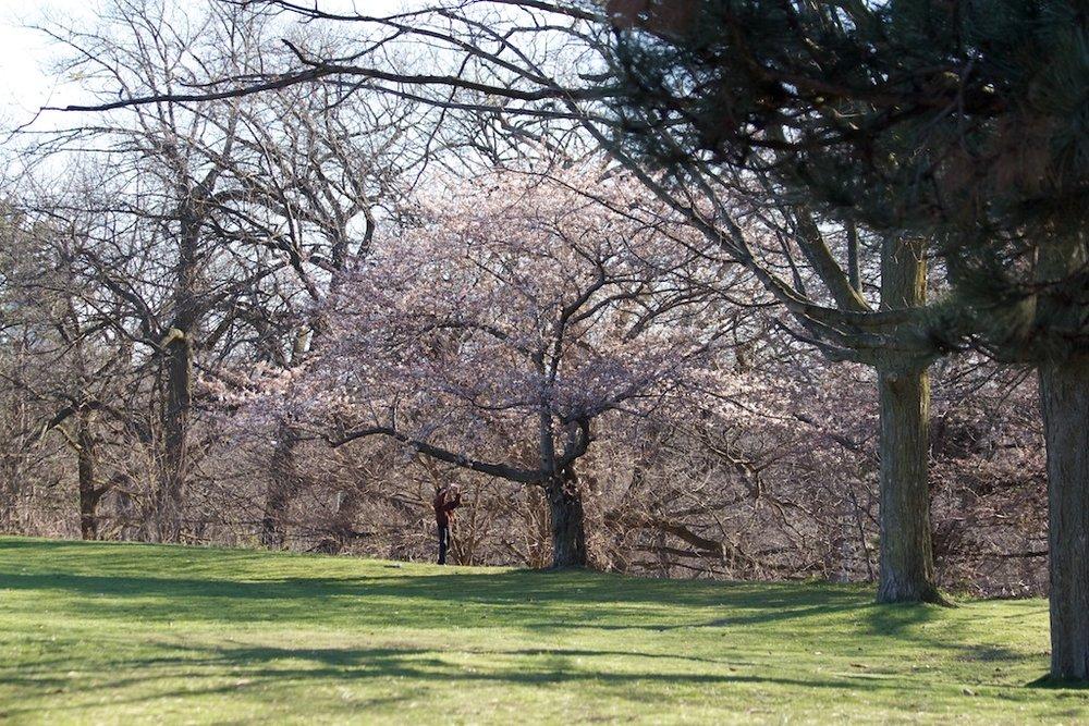 Sakura_285-2012-04-06.jpg