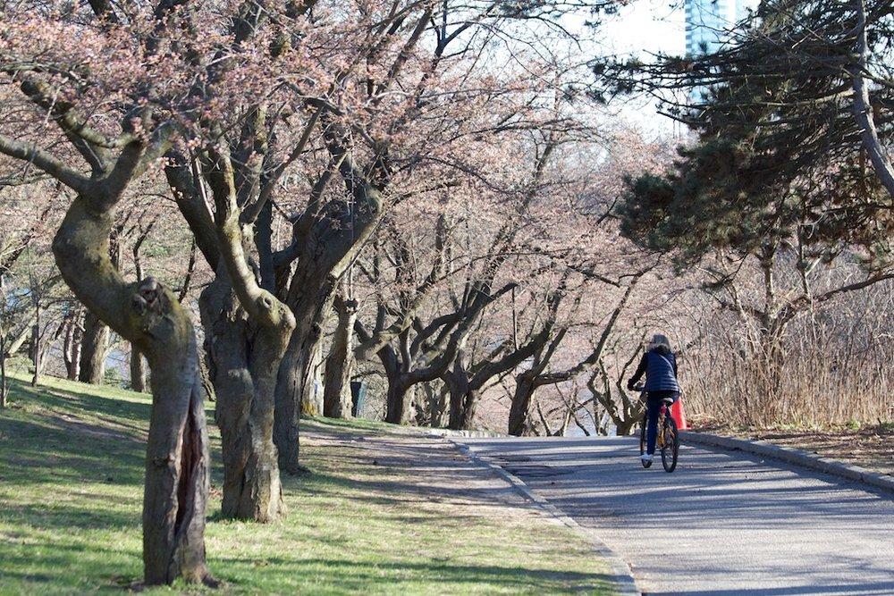 Sakura_302-2012-04-06.jpg
