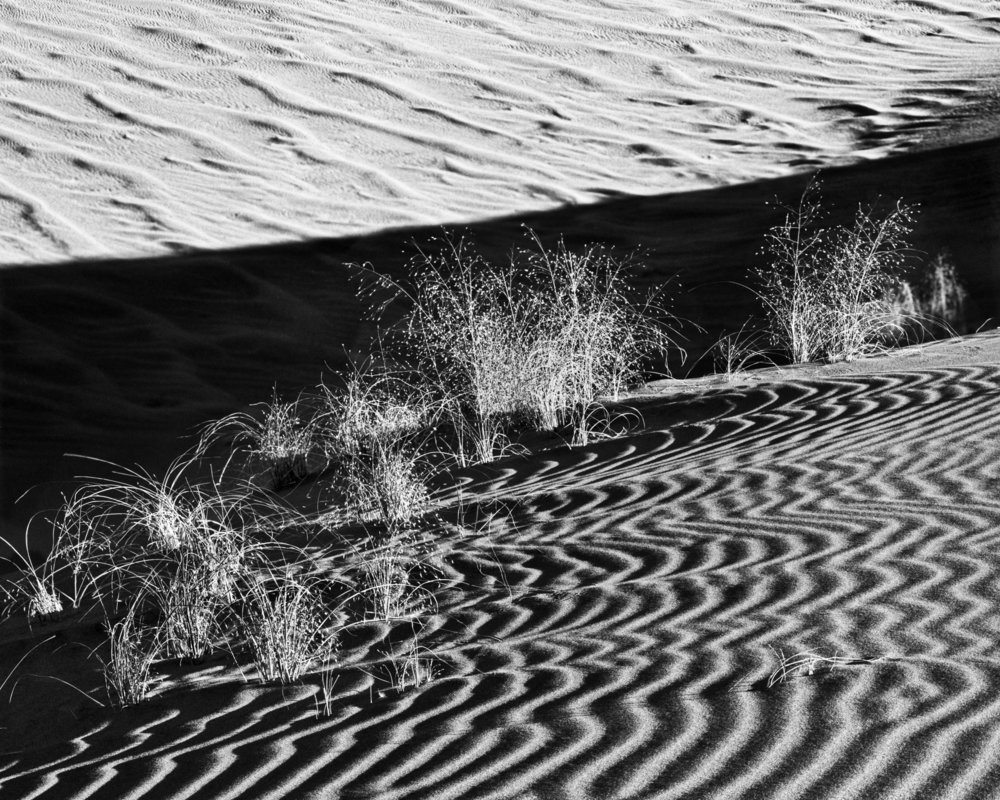 325_Dunes_and_Plants.jpg