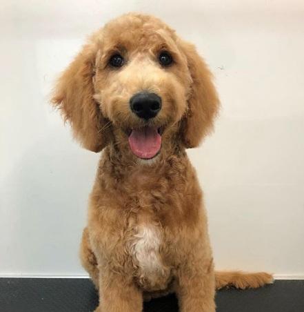 Max's first haircut!