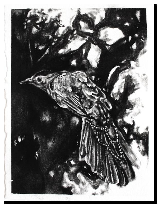 emma-vidal-oiseaux-charcoal-shadow.png