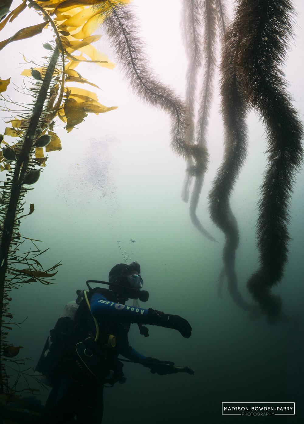 Diver and kelpLOGO.jpg