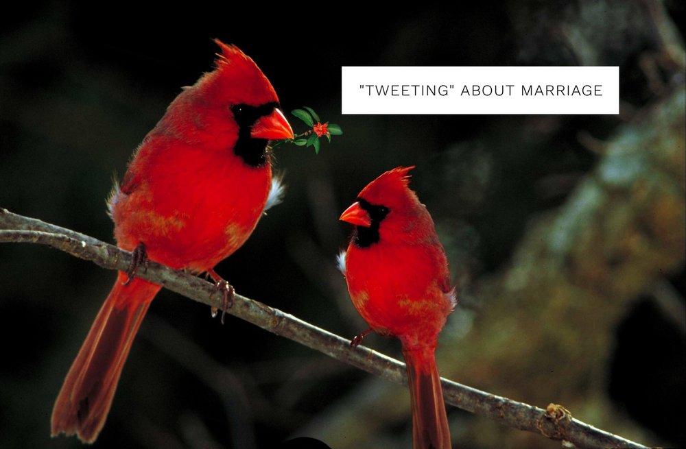 cardinals1.jpg