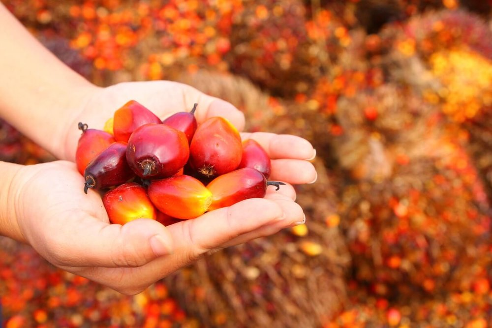 Is Palm Oil Really Bad for the Environment? -