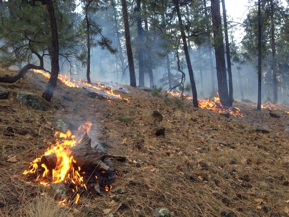 Help prevent wildfires. Even a stray cigarette can start a wildfire. Please smoke only in designated smoking areas during your visit and place extinguished cigarettes in designated areas.
