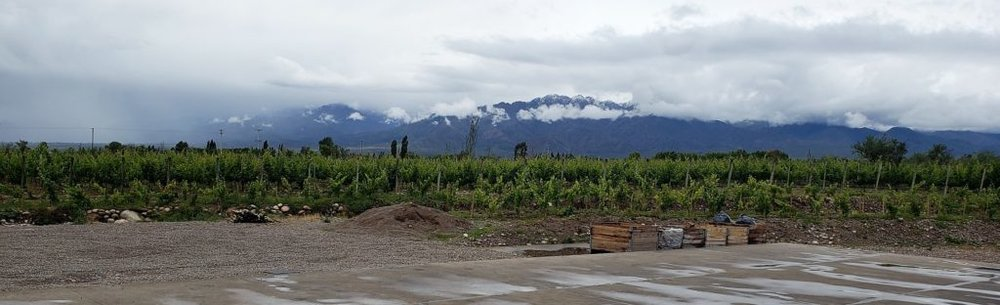 Mendoza-Vineyard-v2-1024x312.jpg