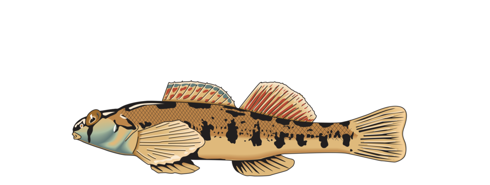 logo_StreamTechs_colorlr.png