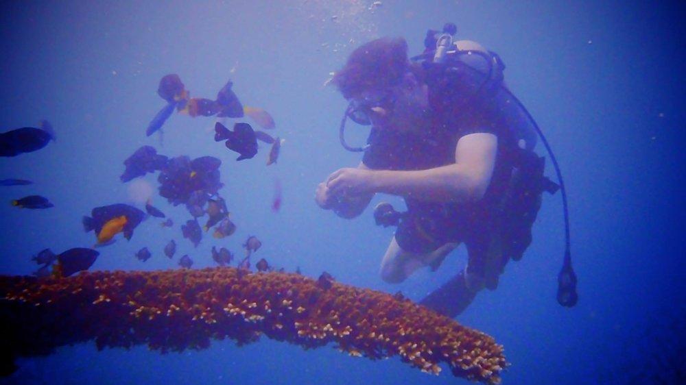 Diving in Cangu