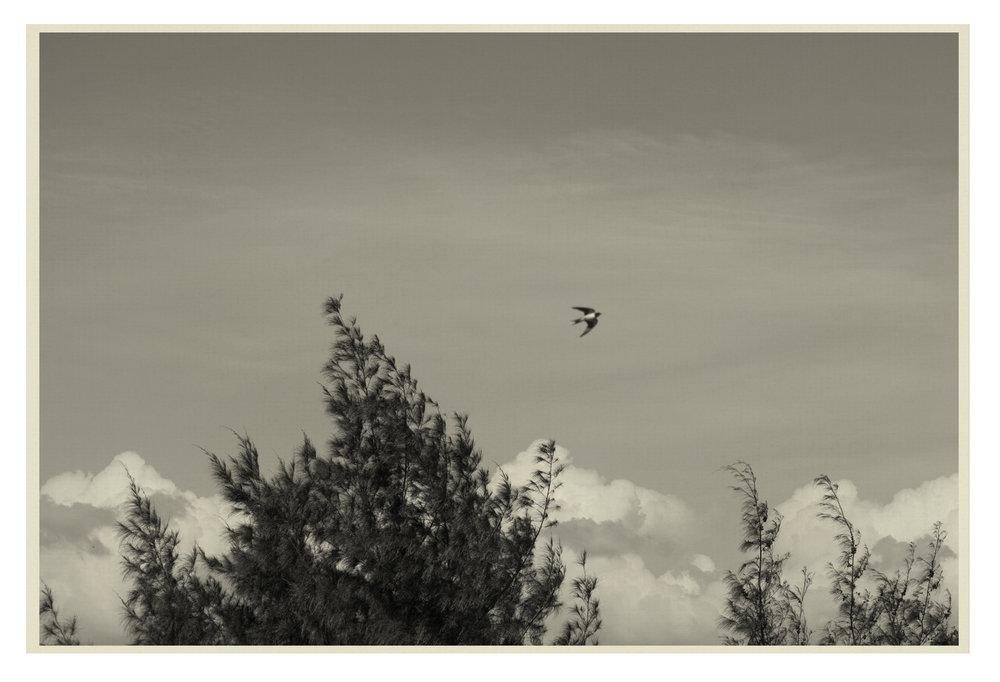 Bird9.jpg
