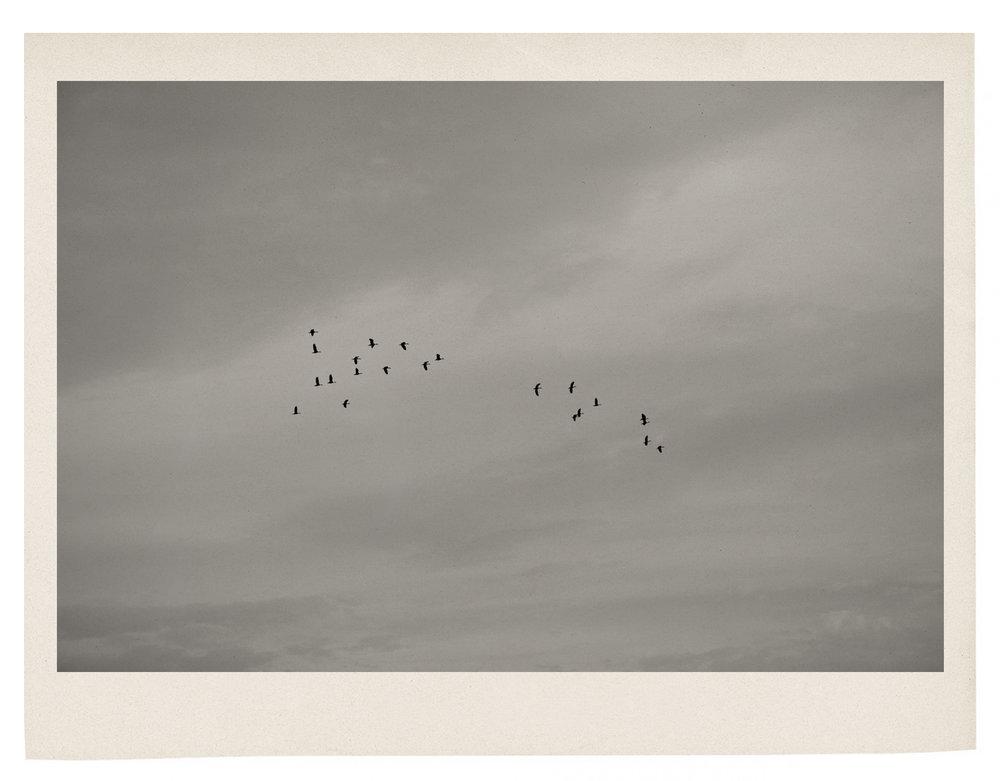 Birds in the sky.jpg