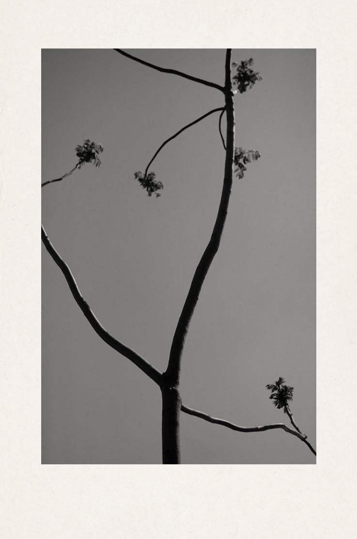 Branch2bis.jpg