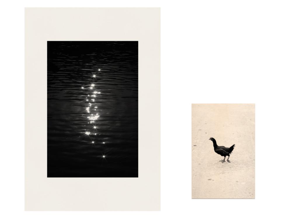Reflet galinha.png
