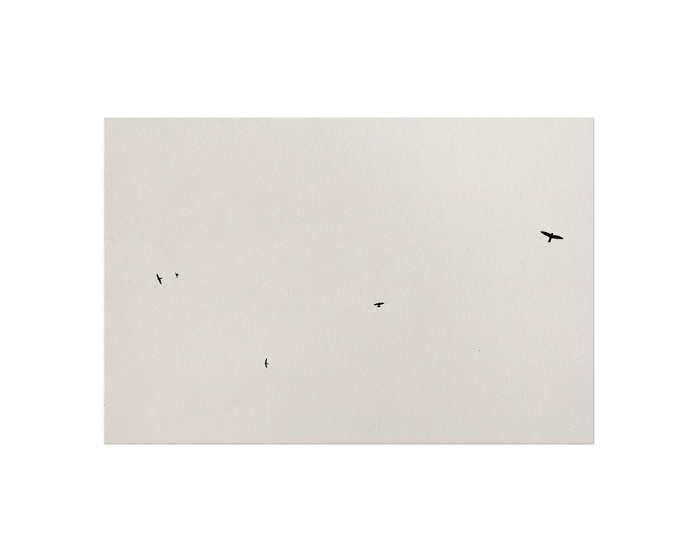 Birds.jpg