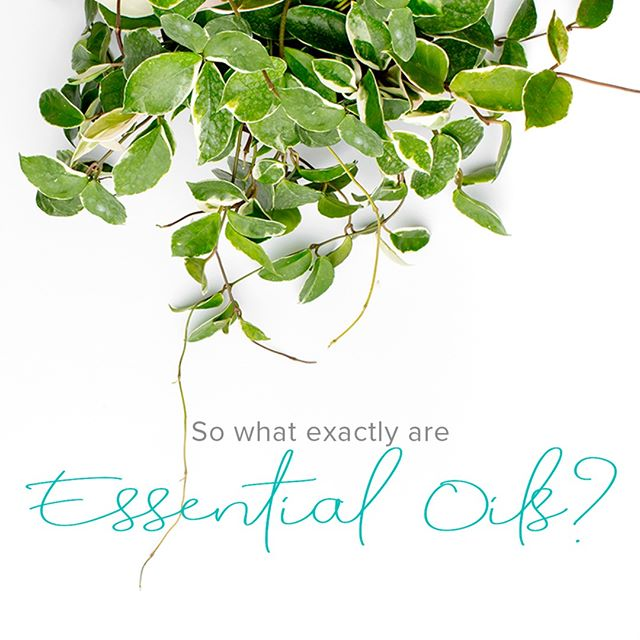 So, what is an Essential Oil?⠀⠀⠀⠀⠀⠀⠀⠀⠀ ⠀⠀⠀⠀⠀⠀⠀⠀⠀ Essential oils are natural compounds found in seeds, bark, stems, roots and flowers of plants. They give plants their smell, help protect the plant and play a role in plant pollination. ⠀⠀⠀⠀⠀⠀⠀⠀⠀ ⠀⠀⠀⠀⠀⠀⠀⠀⠀ The same compounds that are beneficial to plants also have beneficial properties for our physical and emotional wellbeing, with each oil having its own unique set of benefits.⠀⠀⠀⠀⠀⠀⠀⠀⠀ ⠀⠀⠀⠀⠀⠀⠀⠀⠀ For example, they can be great addition to your beauty routine, can be used to clean your home safely and easily, can be used to support your mood and can enhance flavours in food. ⠀⠀⠀⠀⠀⠀⠀⠀⠀ ⠀⠀⠀⠀⠀⠀⠀⠀⠀ These oils are safe for your whole family (including furry and feathered friends!) when used correctly. They are effective at what they do, and a great natural option to have in our homes. ⠀⠀⠀⠀⠀⠀⠀⠀⠀ ⠀⠀⠀⠀⠀⠀⠀⠀⠀ 💧 One drop is all that is needed for powerful benefits to our wellbeing!⠀⠀⠀⠀⠀⠀⠀⠀⠀ ⠀⠀⠀⠀⠀⠀⠀⠀⠀ Essential oils have been used throughout history all over the world. Ancient civilisations, such as the Egyptians, used plants for many things like beauty treatments, food preparation, religious ceremonies and health care. Clearly they must work to have been around for so long!⠀⠀⠀⠀⠀⠀⠀⠀⠀ ⠀⠀⠀⠀⠀⠀⠀⠀⠀ Have you ever used essential oils before? I'd love to know what your experience was like in the comments below! ⠀⠀⠀⠀⠀⠀⠀⠀⠀ ⠀⠀⠀⠀⠀⠀⠀⠀⠀ ⠀⠀⠀⠀⠀⠀⠀⠀⠀ ⠀⠀⠀⠀⠀⠀⠀⠀⠀ ⠀⠀⠀⠀⠀⠀⠀⠀⠀ #essentialoils #essentialoils101 #essentialoilswork #essentialoilsforthewin #essentialoilsrock #doterra #doterraoils #doterralife #doterraessentialoils #doterraliving #doterrafamily #doterrababy #doterraaustralia #doterrakids #aromatherapyoil #crunchymoms #crunchymomma #oilymama #mumpreneur #boymum #mumgoals #joyfulmama #motherhoodunplugged #motherhoodsimplified #motherhoodrocks #motherhoodunited #motherhoodunfiltered #realmotherhood #mumswhoblog #goaldiggermovement