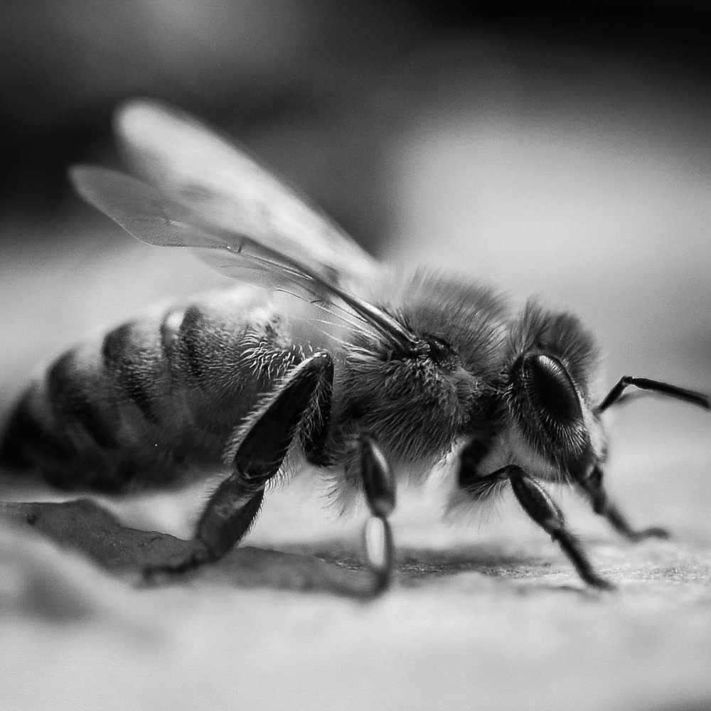 Worker-Bee-1 (1).jpg