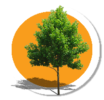 1,050+ - TREES PLANTED TO HELP REDUCE THE AMOUNT OF STORM WATER RUNOFF, REDUCE EROSIONS AND MORE.