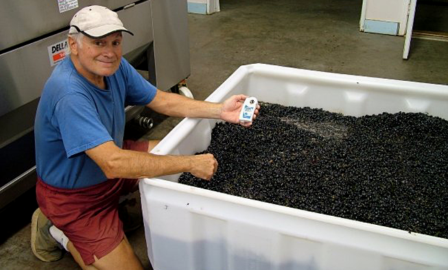 Testing Brix in Wine Grapes Venturi Schulze Vineyards