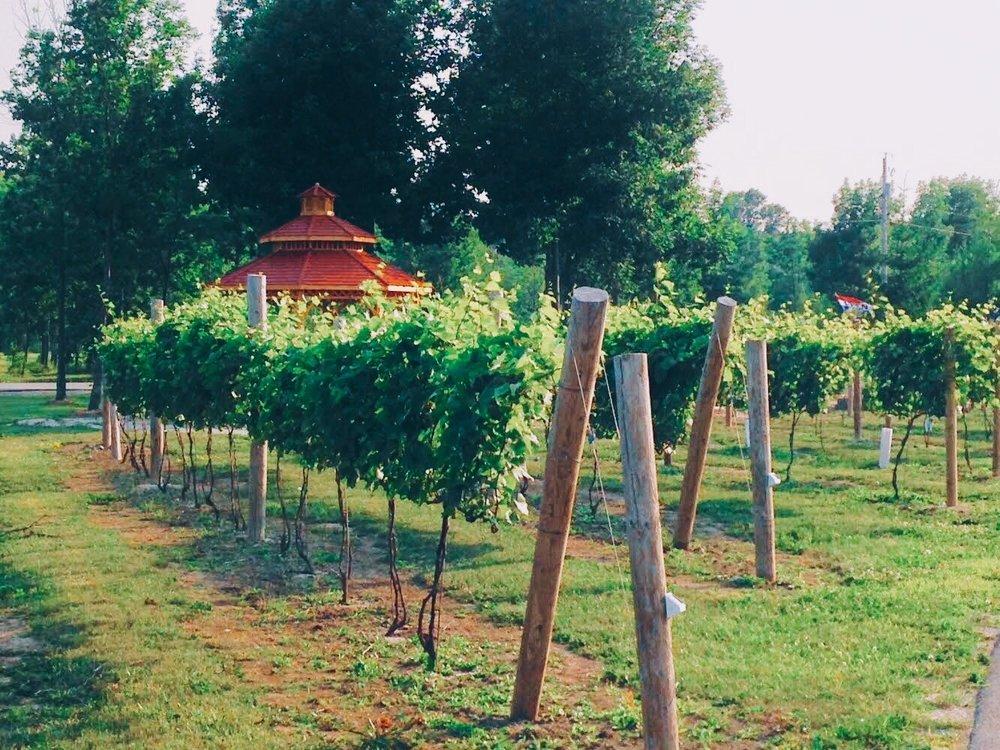 Pictures of our vines in Door County.