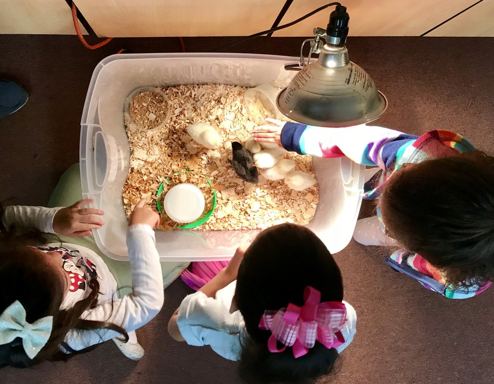 Engage in hands-on science activities that making learning fun.