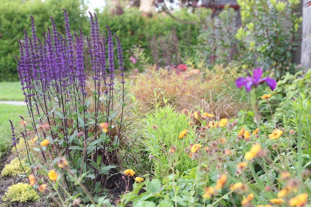 Native & edible plantings -