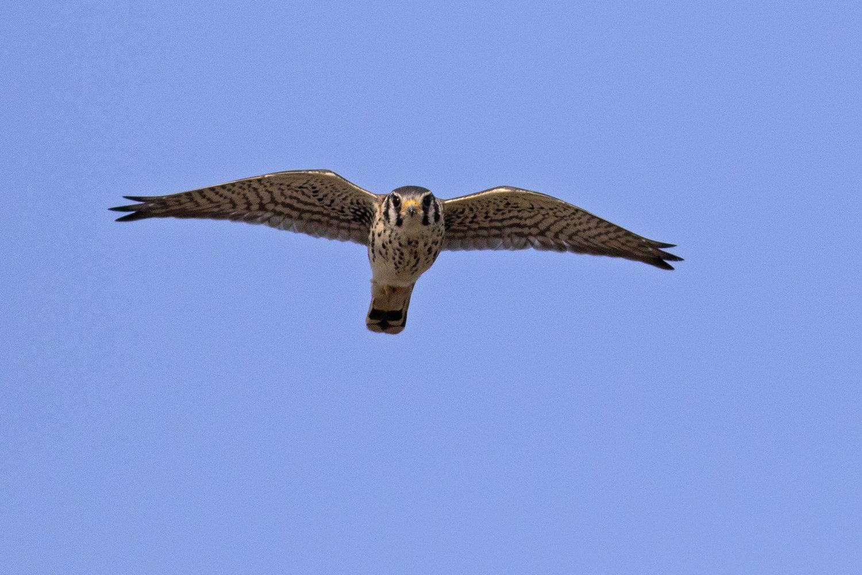 Birds & Coffee at Jarvis Bird Sanctuary — Chicago Audubon