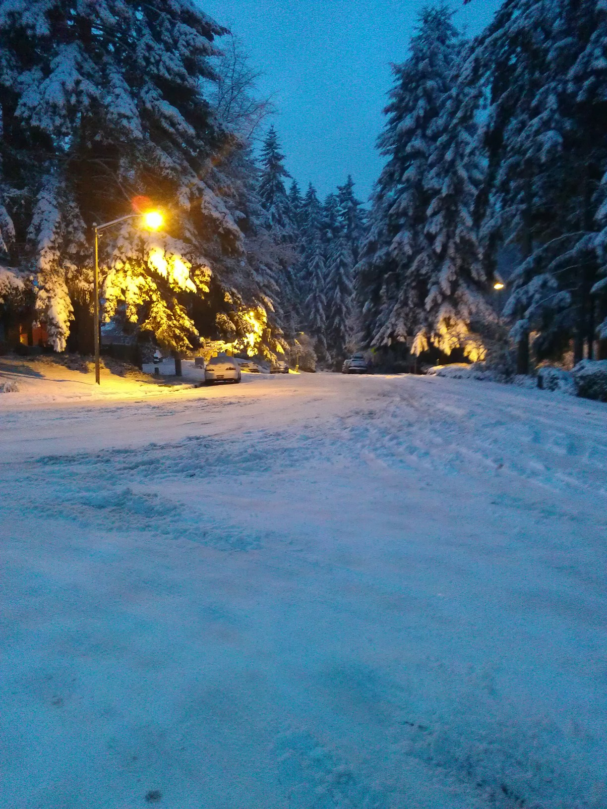 A winter scene from near my home. Heavy snow blankets the ground and the towering evergreen trees, while a lone streetlamp casts a warm, golden glow over part of the scene.