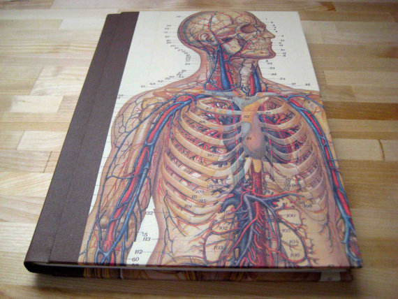 Cover shot of a hardback book with an anatomical illustration of a human being, showing veins and arteries and bones with certain annotations.