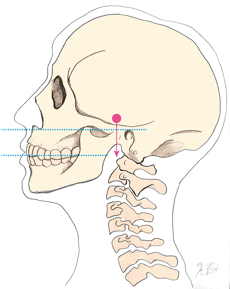 skull_and_spineWeb.png