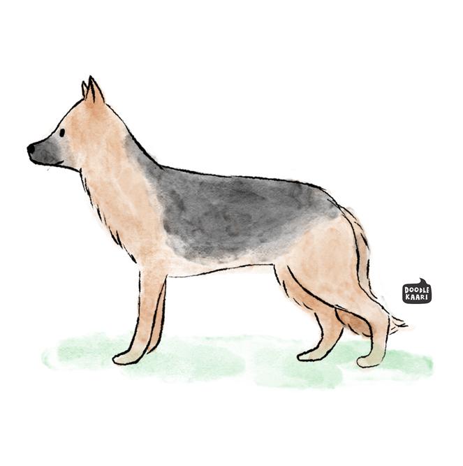 3-german_shepherd.jpg
