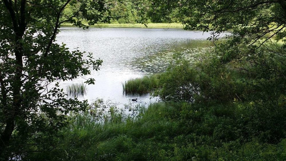 A lush spot in my local pond, Ortuvann
