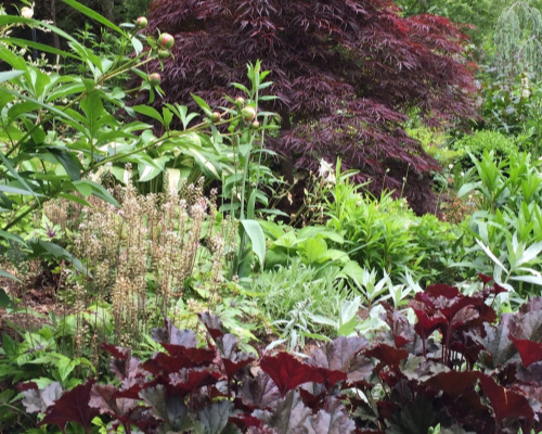 Gayle-Gardens-Our-Work-BeforeAfter.jpg