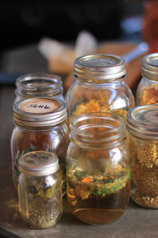 Herbal Allies - Nettles, Thyme, Calendula, & Yarrow Pictured Here