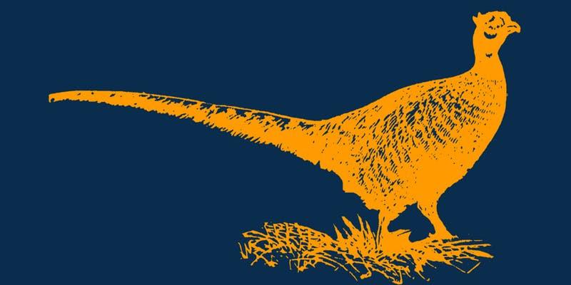 Golden Pheasant — East Nasty