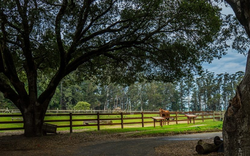 SVMHC Supports the Preservation of this historical morgan landmark - Our club is dedicated to assisting Pt. Reyes Morgan Horse Ranch in its operation and the continued use of our Morgan horse.