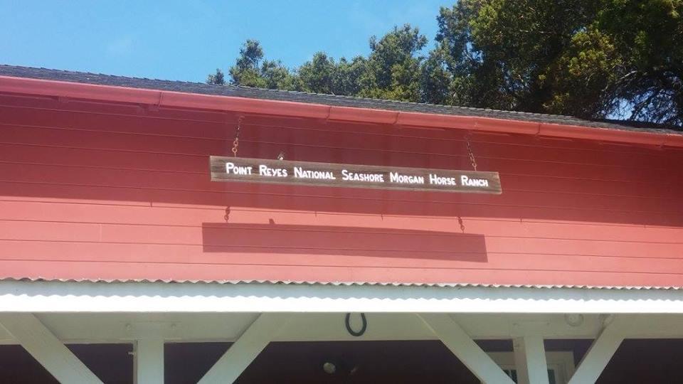 - Point Reyes Morgan Horse Ranch