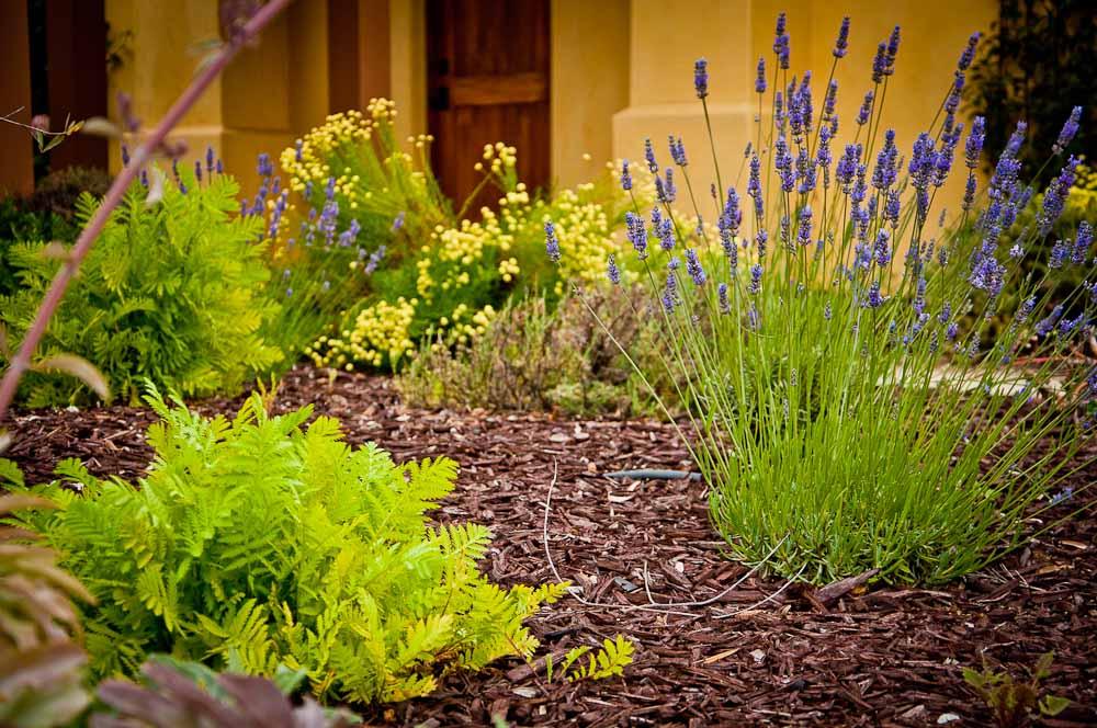 san-luis-obispo-landscaping-sage-ecological-landscapes-o-residence-web-size-18-of-92__dsc0538.jpg