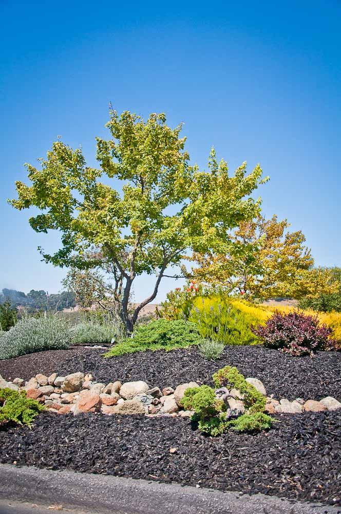 san-luis-obispo-landscaping-sage-ecological-landscapes-baker-avila-residence-web-size-46-of-73_20120731-untitled-shoot-untitled-6233.jpg
