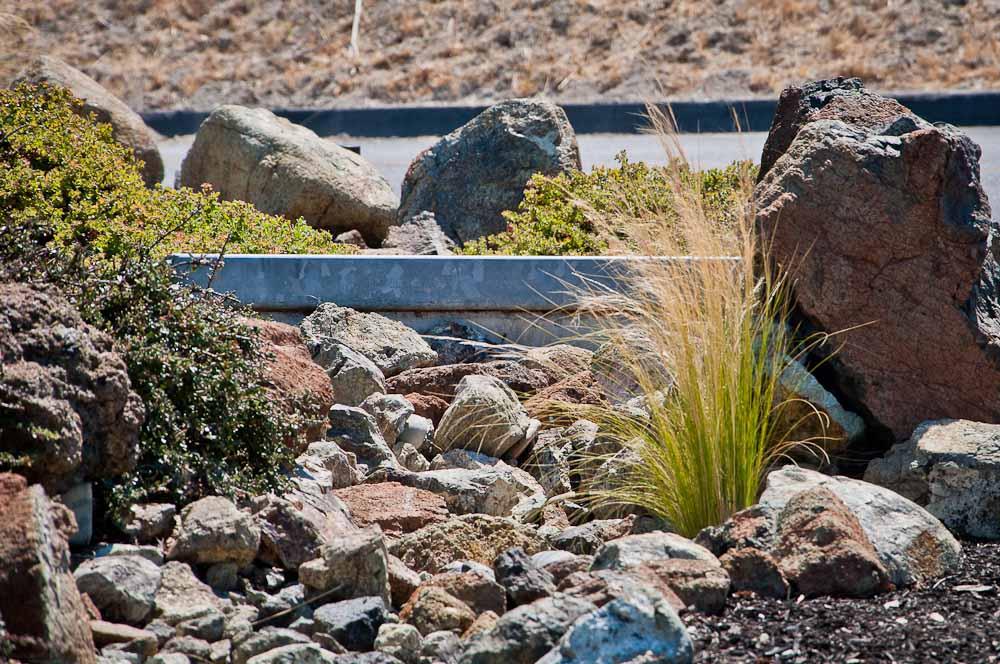 san-luis-obispo-landscaping-sage-ecological-landscapes-baker-avila-residence-web-size-47-of-73_20120731-untitled-shoot-untitled-6236.jpg