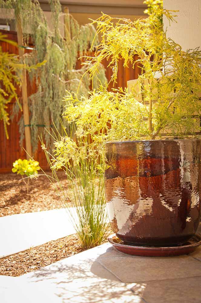 san-luis-obispo-landscaping-sage-ecological-landscapes-brown-residence-web-size-12-of-43__dsc7624.jpg
