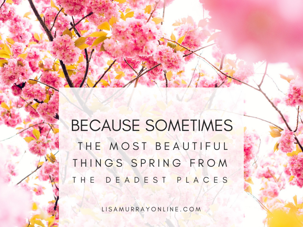 Because Sometimes The Most Beautiful Things Spring From The Deadest Places