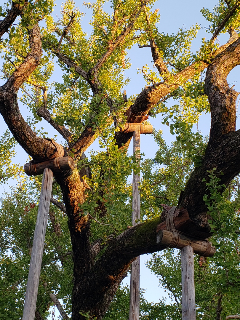 The branch supports and the way they were fixed using natural materials seemed nurturing and loving to me.